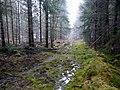 Logging track - geograph.org.uk - 692941.jpg