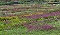 London Wetlands (6089500799).jpg
