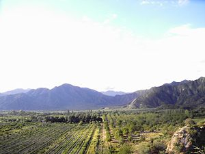 Catamarca Province - Fruit orchards near Londres.