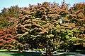 Longwood 2012 10 20 1055 (8673883282).jpg