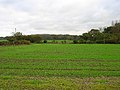 Looking towards Lower Wood - geograph.org.uk - 77773.jpg
