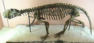 <i>Lycaenops</i> genus of mammals (fossil)