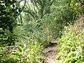 Lyme Regis Undercliff - geograph.org.uk - 47304.jpg