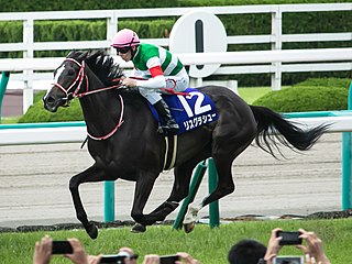 Lys Gracieux Japanese Thoroughbred racehorse