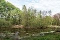 Münster, Wolbeck, Wolbecker Tiergarten, Naturwaldzelle -Teppes Viertel- -- 2014 -- 7081.jpg