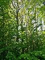 MD.ED.Zăbriceni - rezervația peisagistică Zăbriceni - apr 2018 - 11.jpg