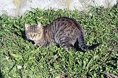 mačička striekať na stiahnutie