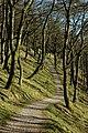 Macclesfield Forest oak.jpg