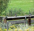 Magpies on a Fence, Reeder Creek Ranch, CO 8-26-12 (8023563012).jpg