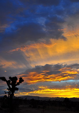 Sunset - Evening twilight in Joshua Tree, California, USA displaying the separation of yellow colors in the direction from the Sun below the horizon to the observer, and the blue components scattered from the surrounding sky