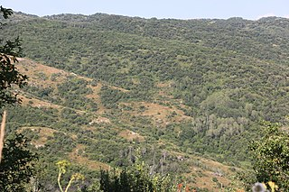 Zhongar-Alatau National Park