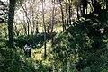 Mannan Castle, Co. Monaghan - geograph.org.uk - 609123.jpg