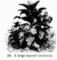 Manual of Gardening fig029.png