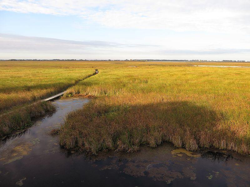 File:Marsh Boardwalk, Point Pelee National Park, Leamington, Ontario, Canada (21586346808).jpg