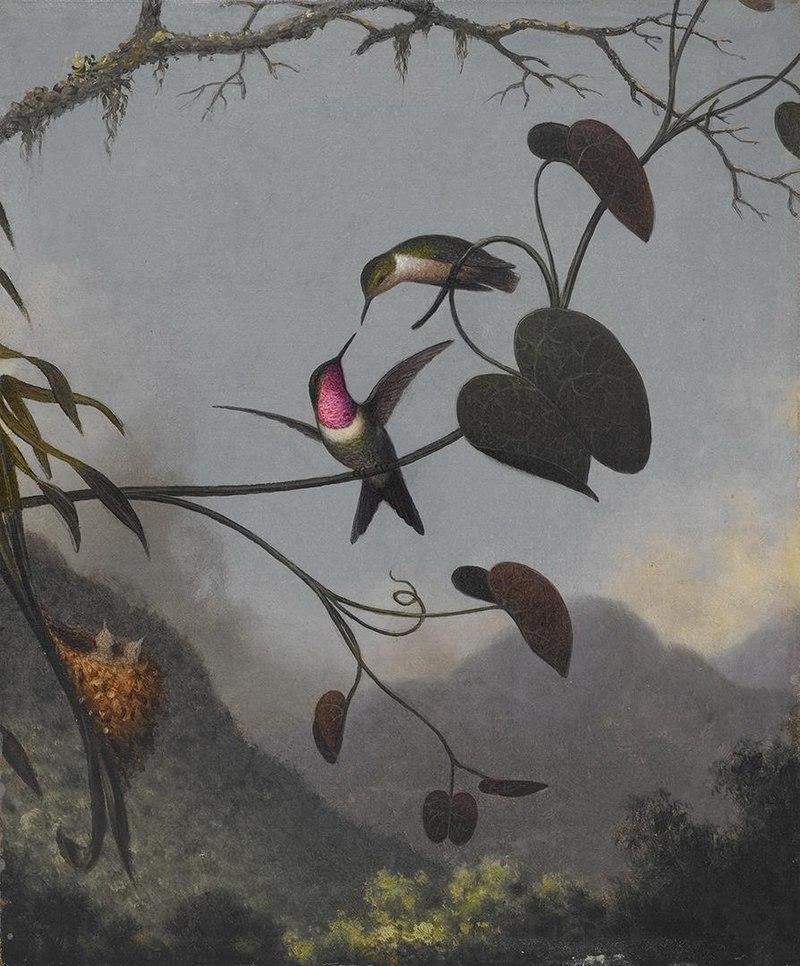 Martin Johnson Heade - Amethyst Woodstar - 2006.84 - Crystal Bridges Museum of American Art.jpg