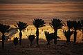 Masada 16328 (11820682336).jpg