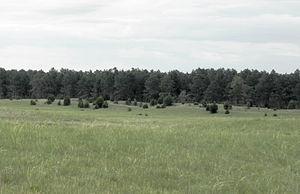 Samuel R. McKelvie National Forest - Image: Mc Kelvie Scene lg