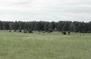 Samuel R. McKelvie National Forest