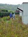 Meadow @ Eden Project (9757590824).jpg