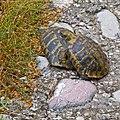Meteora (6084054543).jpg