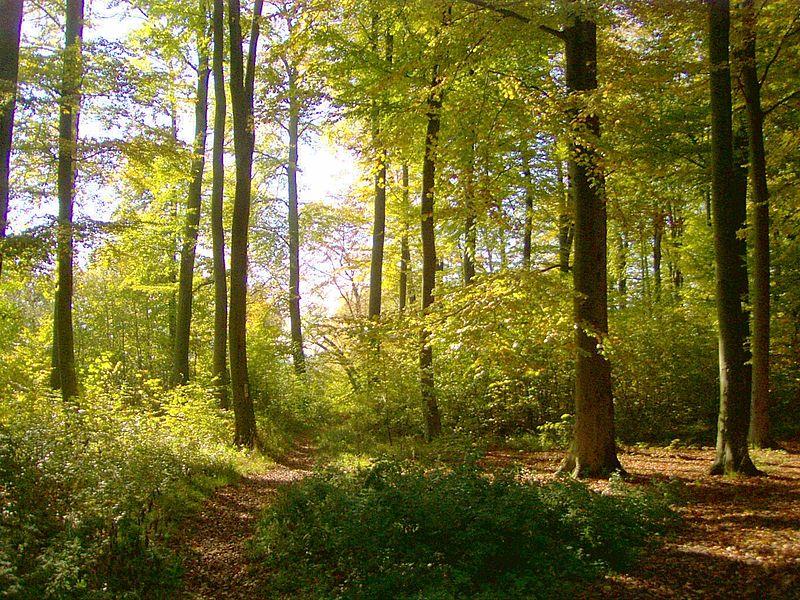 Buchenwald in einer naturnahen, strukturreichen Form