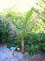 Miami Beach Botanical Garden - IMG 8023.JPG