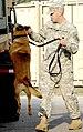 Military narcotics dog.jpg