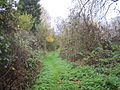 Mill Hill Old Railway.JPG