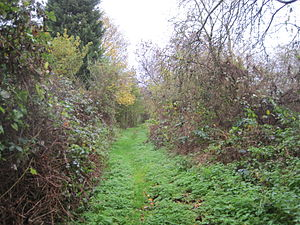 Mill Hill Old Railway Nature Reserve - Image: Mill Hill Old Railway