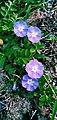 Mini flower .jpg