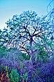 Misquite - panoramio.jpg