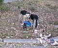 Moldova Chisinau stray dogs.jpg