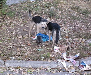 English: Stray dogs in Chisinau (Moldova), nea...