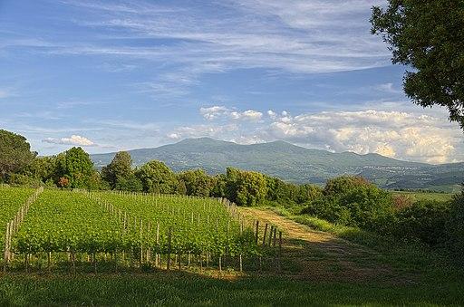 Brunello di Montalcino vineti e Monte Amiata