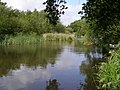 Mopley Pond, Cadland Estate - geograph.org.uk - 438565.jpg