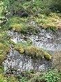 Moss covered rocks, Lake Vyrnwy - geograph.org.uk - 1323105.jpg