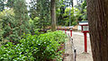 Mount Takao - Trail 1 (9409426238).jpg