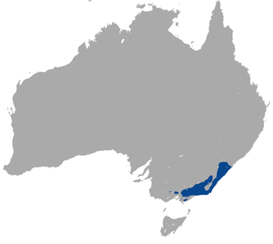 Mountain Brushtail Possum area.png