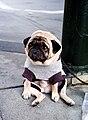 Mr Newman - the world's saddest dog (2).jpg
