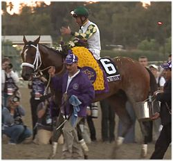 Mucho Macho Man at 2013 Breeders Cup.jpg