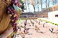 Museo del Vino del Campo de Borja (Monasterio de Veruela).jpg