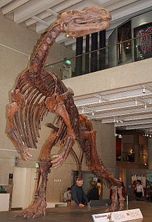 list of dinosaurs simple english wikipedia the free