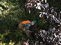 My Public Lands Roadtrip- O.H. Hinsdale Rhododendron Garden in Oregon (19096633725).jpg