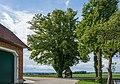 NDOÖ 407 Linde Nußbach 05 2014.jpg