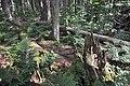 NPR Boubínský prales 20120910 20.jpg
