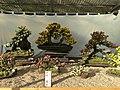 Nagoya Castle Chrysanthemum Competition 2017 10.jpg