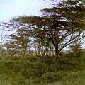Nairobi National Park (3201563736).jpg