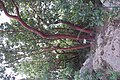 National Botanic Garden of Israel 25.jpg