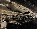 Natural History exhibit with a blue whale skeleton and model Wellcome V0038342.jpg