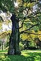 Naturdenkmal 350-jährige Eiche auf dem Platnersberg in Nürnberg 20170825 120016a.jpg